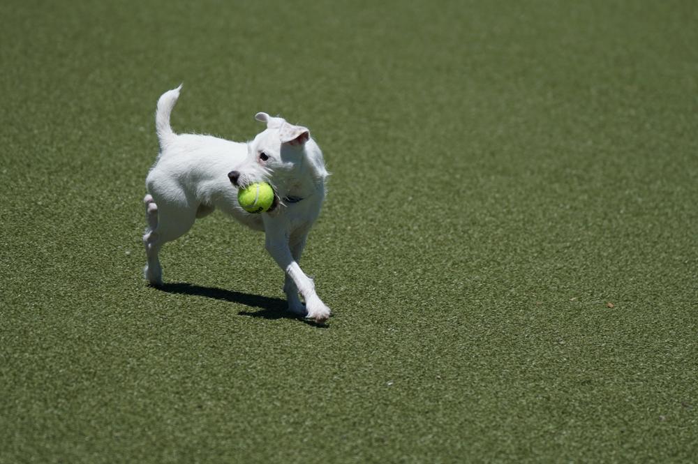 dog park /